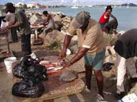 Cleaning fish on the shore